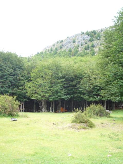 Acampando entre los árboles